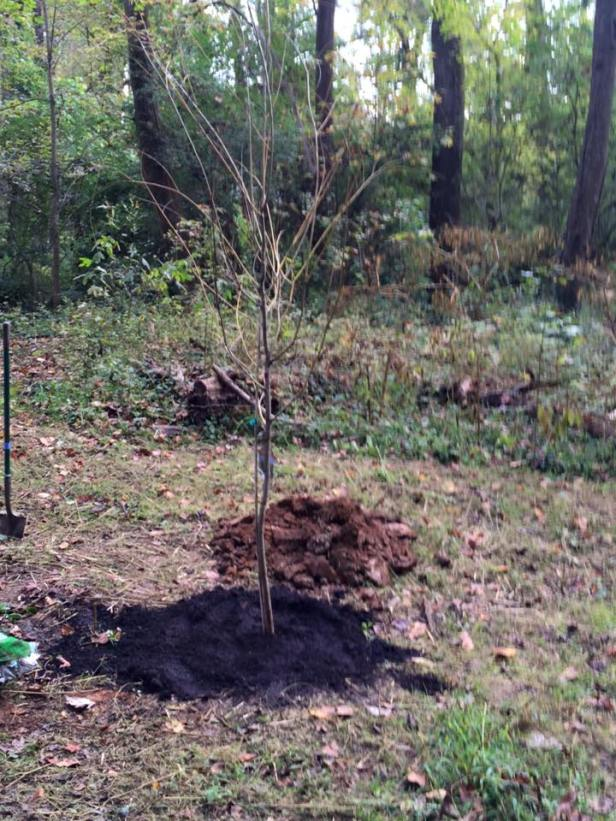 tree-planted-2