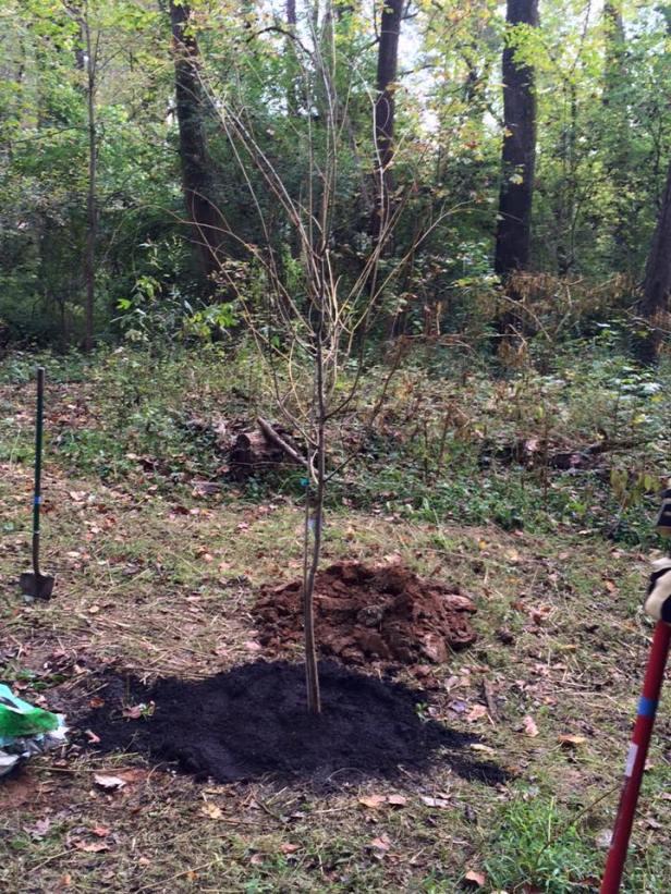 tree-planted-4