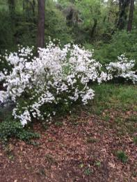 tree-update-april-5-2016-2