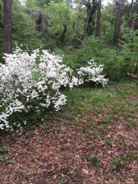 tree-update-april-5-2016-3