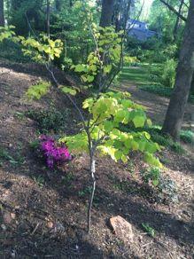 tree-update-april-5-2016