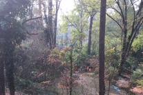 autumn-nov-15-2016-cleared-area