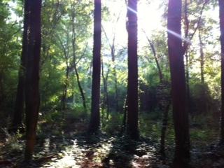 Dearborn Park near Blue Sky Condos near Shoal Creek