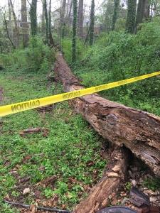 Tree down in Dearborn Park Trail April 4, 2018