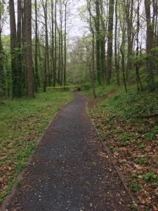 Dearborn Park tree down April 4, 2018
