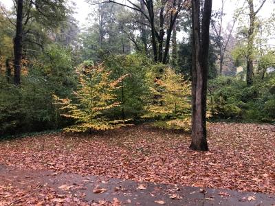 Autumn in Dearborn Park 1301 Deerwood Drive Decatur City of Decatur Park DeKalb County Parks & Rec Friends of Dearborn Park Trees