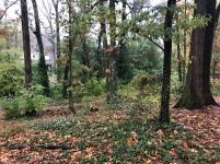 Autumn in Dearborn Park 1301 Deerwood Drive Decatur City of Decatur Park DeKalb County Parks & Rec Friends of Dearborn Park