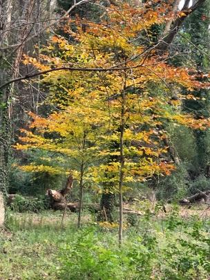 Autumn in Dearborn Park 1301 Deerwood Drive Decatur