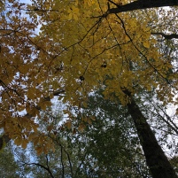 Autumn in Dearborn Park 1301 Deerwood Drive Decatur City of Decatur Park DeKalb County Parks & Rec Friends of Dearborn Park Trees