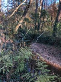 Shoal Creek along Midway Rd near Dearborn Park