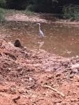 Blue Heron Dearborn Park