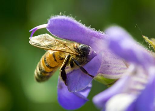 Ground Bees hive Dearborn Park Decatur GA DeKalb Parks & Rec City of Decatur
