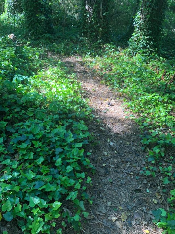 Dearborn Park Trail discovered by Friends of Dearborn Park Decatur DeKalb Parks & Rec City of Decatur